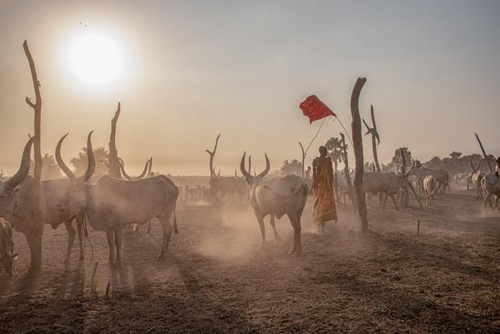 Remote cattle camps can often be subject to raids from neighbouring tribesValentina Morriconi