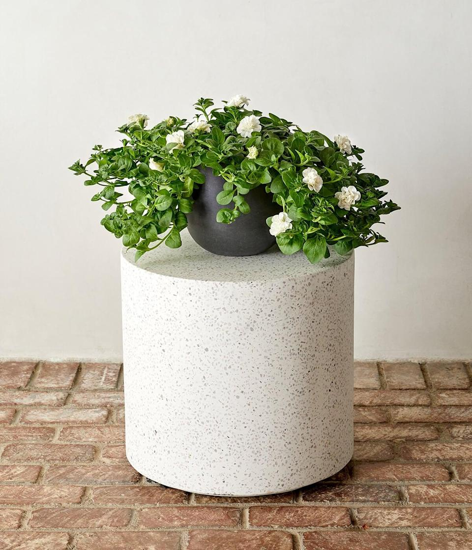 <p>This <span>Bloomscape Outdoor White Petunia Annuals</span> ($40) is about as gorgeous as it gets, and a perfect present under $50.</p>