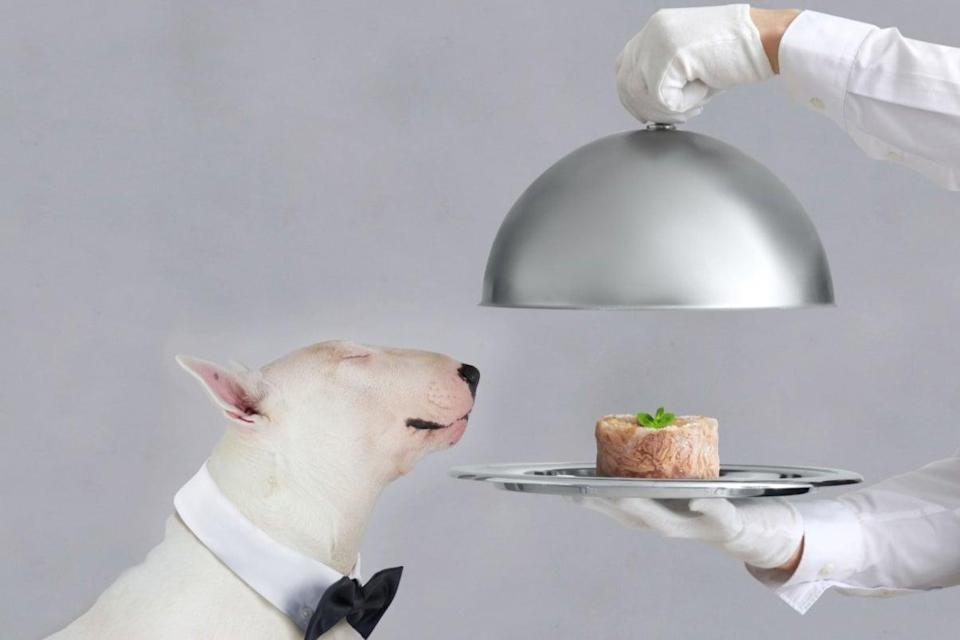 (Luxury pet retailer Love My Human is opening a new site in London)