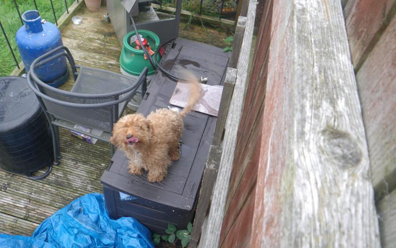 Honey the dog who was left in a house for two weeks while it's owners were away - Credit: SWNS