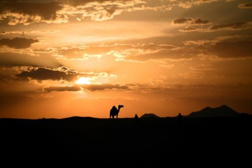 A camel crosses the desert at dusk along the route for the 2020 Dakjar rally
