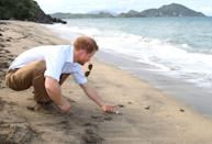 <p>Prince Harry is seen here connecting with nature—in this case, a baby turtle—while on a trip to the turtle conservation project on St. Kitts's Lover's Beach. The prince's visit to the Caribbean marked the 35th Anniversary of Independence in Antigua and Barbuda and the 50th Anniversary of Independence in Barbados and Guyana. <br></p>