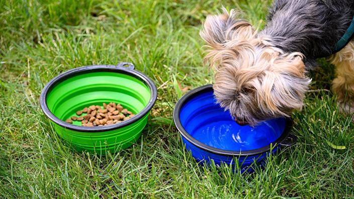 Pets should have free access to plenty of water during hot days.