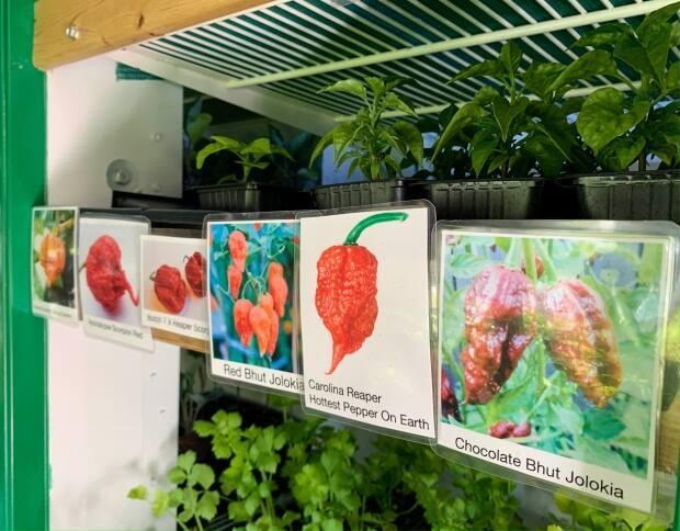Fogarty says customers get excited about the exotic plant varieties he carries.