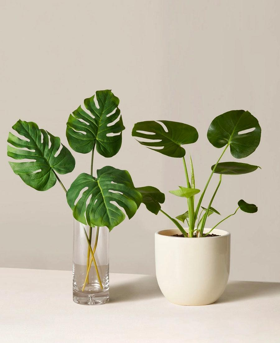 """What could possibly be better than a plant to take care of? One that never dies. The Sill's Monstera duo (a 7-inch planter with its faux counterpart) is the perfect engagement gift for the green and the not-so-green thumb. $98, The Sill. <a href=""""https://www.thesill.com/products/the-monstera-duo?variant=32617767993449"""" rel=""""nofollow noopener"""" target=""""_blank"""" data-ylk=""""slk:Get it now!"""" class=""""link rapid-noclick-resp"""">Get it now!</a>"""