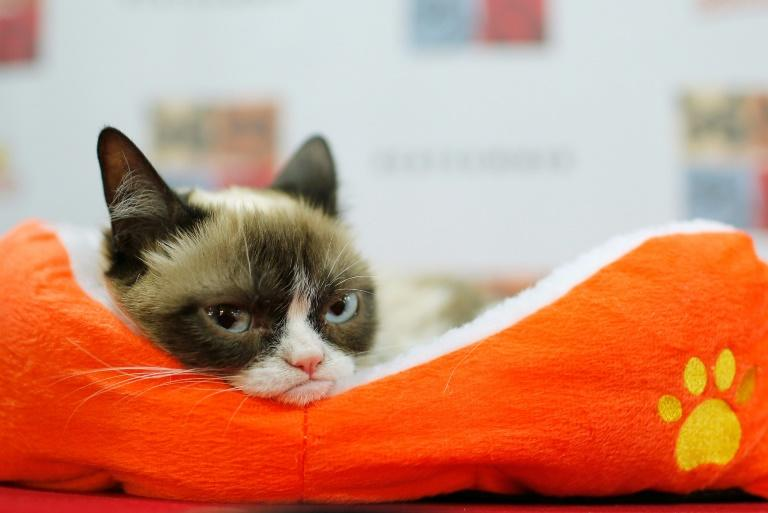 Grumpy Cat -- seen here in June 2014 -- was one of the most successful pet influencers before her death in May 2019