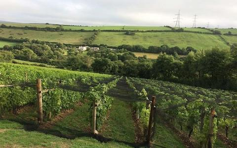 Camel Valley Winery