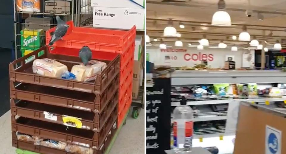 Two pigeons eating some bread inside a Sydney Coles store.