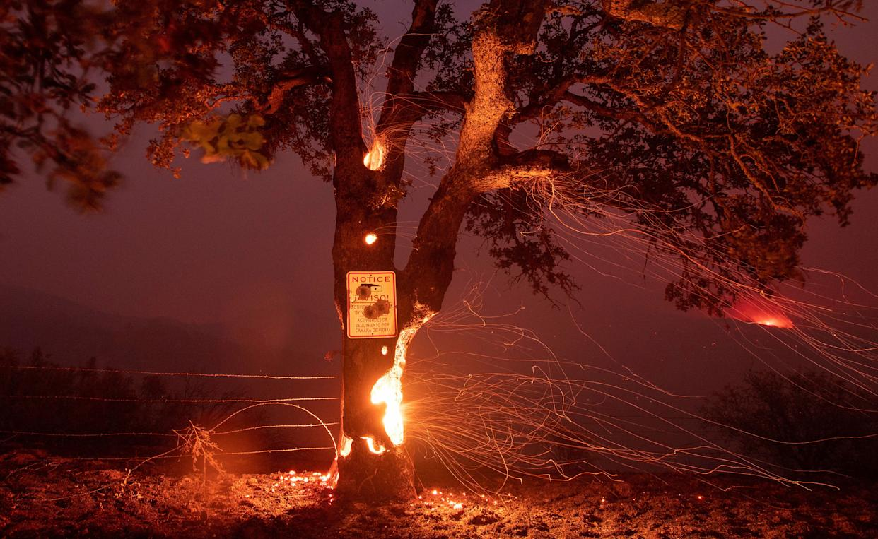 A tree burns from the inside during the Ranch Fire in Clearlake Oaks, California.