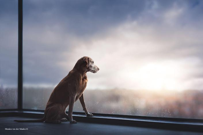 <p>In third place for the category of older dogs is Ozzy — a 12-year-old beautiful rescued Greyhound. </p>