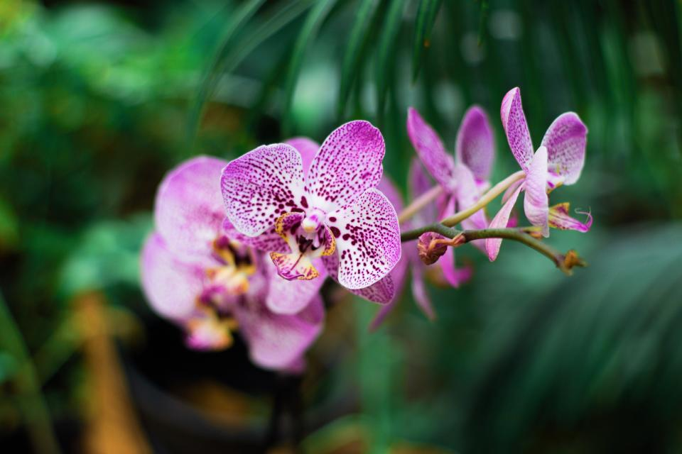 Orchid - top 10 house plants