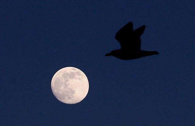 The moon before becoming a supermoon