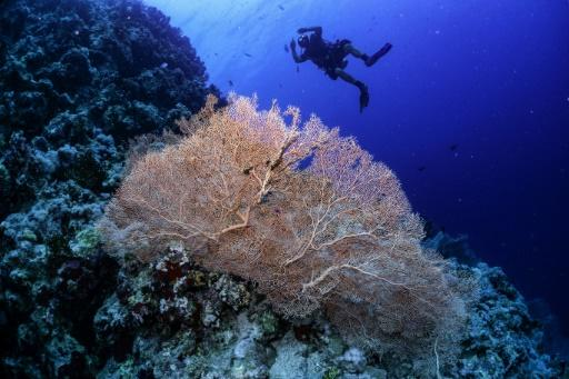 The research shows that it is possible for coral to survive and even thrive in waters that are warmer and more acidic than where coral usually lives