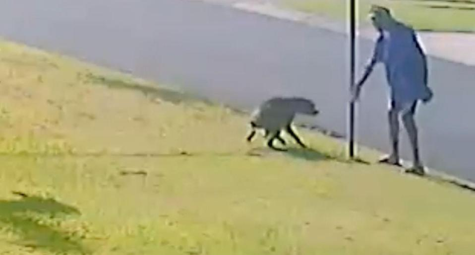 The man appears to lure the dog towards him before the attack. Source: RSPCA QLD