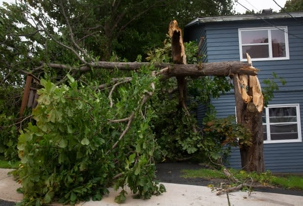 A tree is seen downed in St. John's after Hurricane Larry crossed over Newfoundland's Avalon Peninsula in the early morning hours of Saturday. (Paul Daly/The Canadian Press - image credit)