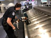 FILE PHOTO: Jessica Anderson works with a beagle to sniff out banned pork products at O'Hare International Airport