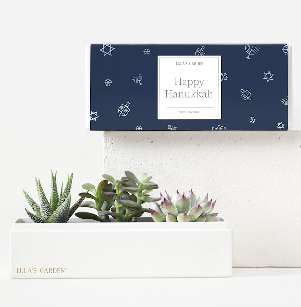 "This year, Lula's Garden has introduced a collection of navy blue Hanukkah boxes with Jewish stars, dreidels, and menorahs (yay for representation!). And let's not forget its curated set of three ""easy to care for"" <a href=""https://www.glamour.com/gallery/houseplants-for-beginners?mbid=synd_yahoo_rss"" rel=""nofollow noopener"" target=""_blank"" data-ylk=""slk:succulents"" class=""link rapid-noclick-resp"">succulents</a> (featuring Jade, Haworthia and Echeveria), which immediately liven up any work-from-home space. $42, Lula's Garden. <a href=""https://www.lulasgarden.com/collections/hanukkah-gifts-2020/products/hanukkah-jewel-garden-2"" rel=""nofollow noopener"" target=""_blank"" data-ylk=""slk:Get it now!"" class=""link rapid-noclick-resp"">Get it now!</a>"