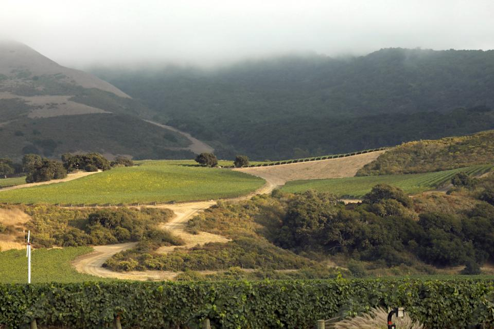 """Fog starts to roll in over the hills from the west into the valleys surrounding vineyards in Lompoc. <span class=""""copyright"""">(Carolyn Cole/Los Angeles Times)</span>"""