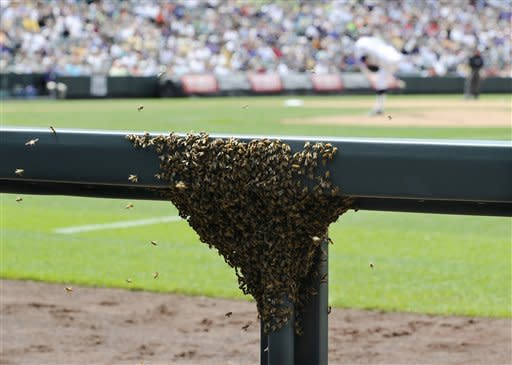In a photo provided by the Colorado Rockies, a swarm of bees covers a portion of the padding in front of the camera bay during the fifth inning of a baseball game between the Arizona Diamondbacks and the Colorado Rockies on Thursday, May 17, 2012, in Denver. The game was temporarily halted. The bees remained stuck to the railing until a beekeeper arrived an inning later to vacuum up the bees and relocate them. The Diamondbacks won 9-7. (AP Photo/Colorado Rockies, Ryan McKee, Rich Clarkson and Associates LLC)