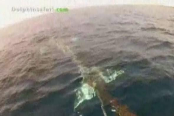 Video: Dramatic rescue of whale stuck in net containing dead animals for a week