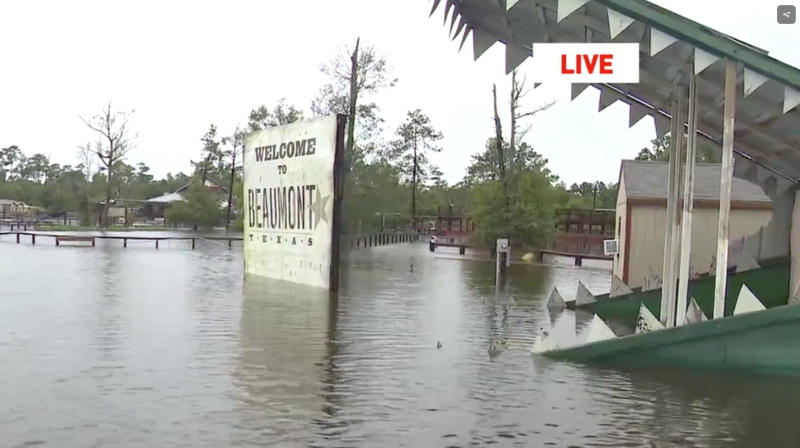 Alligator Sanctuary On Alert As Floodwaters Threaten To Unleash Hundreds Of Gators