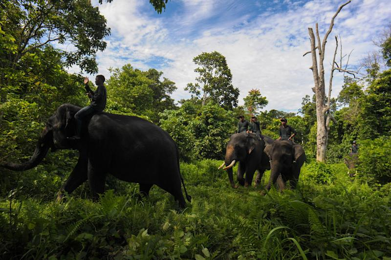 A Provincial Government in Indonesia Wants to Develop UNESCO World Heritage Rainforest
