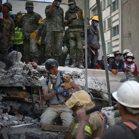 A rescuers pulls a dog out of the rubble during the search for survivors in Mexico City - Credit: YURI CORTEZ/AFP/Getty Images