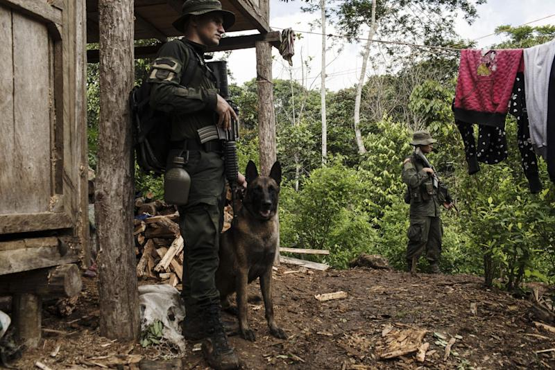 """(Bloomberg) -- Colombia has halted a five-year surge in cocaine production, according the to U.S. government, reducing the risk that President Donald Trump will follow through on his threat to cut the country off from aid and loans.Potential cocaine output fell 1.4% last year, to 887 tons, from a record of 900 tons in 2017, according to the annual report by the White HouseOffice of National Drug Control Policy.Production of the drug in Colombia more than quadrupled between 2012 and 2017, according to U.S. figures, bringing violent chaos to the countryside and threats from Trump that he could """"decertify"""" Colombia as a partner in the war on drugs. That would put the U.S.'s closest ally in South America into the same rogue category as Nicolas Maduro's Venezuela and cut the country off from some aid and loans.The White House report will bring relief to the government of President Ivan Duque, which stepped up eradication programs after taking office last August.Duque wants to resume aerial spraying with weedkiller of coca plants, from whose leaves the drug is extracted. The previous government suspended this in 2015 after a report by the World Health Organization said that the herbicide glyphosate was probably carcinogenic.Duque faces political and legal challenges to being able resume spraying, and in the meantime the government is sending in teams of civilians to dig up coca shrubs by hand, accompanied by police escorts. The illegal armed groups who profit from the trade sometimes attack the eradication teams with sniper fire, and plant landmines in the coca fields. At least 11 people have been killed and 84 injured in operations to eradicate coca this year.The surge in output was also blamed on a variety of other causes, including the drop in the price of gold, which cut the profits in illegal mining, another big earner for the mafia, and a weaker peso, which increased the value of cocaine exports in local money.Even after the drop in output last year, Colombia still """
