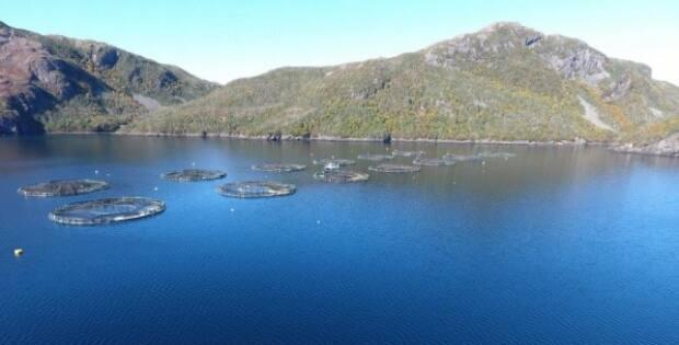 Salmon farming is a major employer on Newfoundland's south coast, but the industry suffered a serious setback in 2019 with the die-off of 2.6 million fish at sites owned by Northern Harvest Sea Farms.