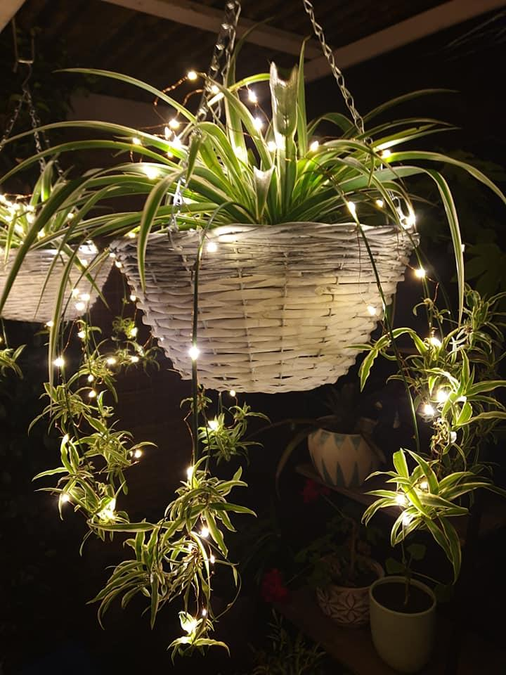 Kmart lights and plant
