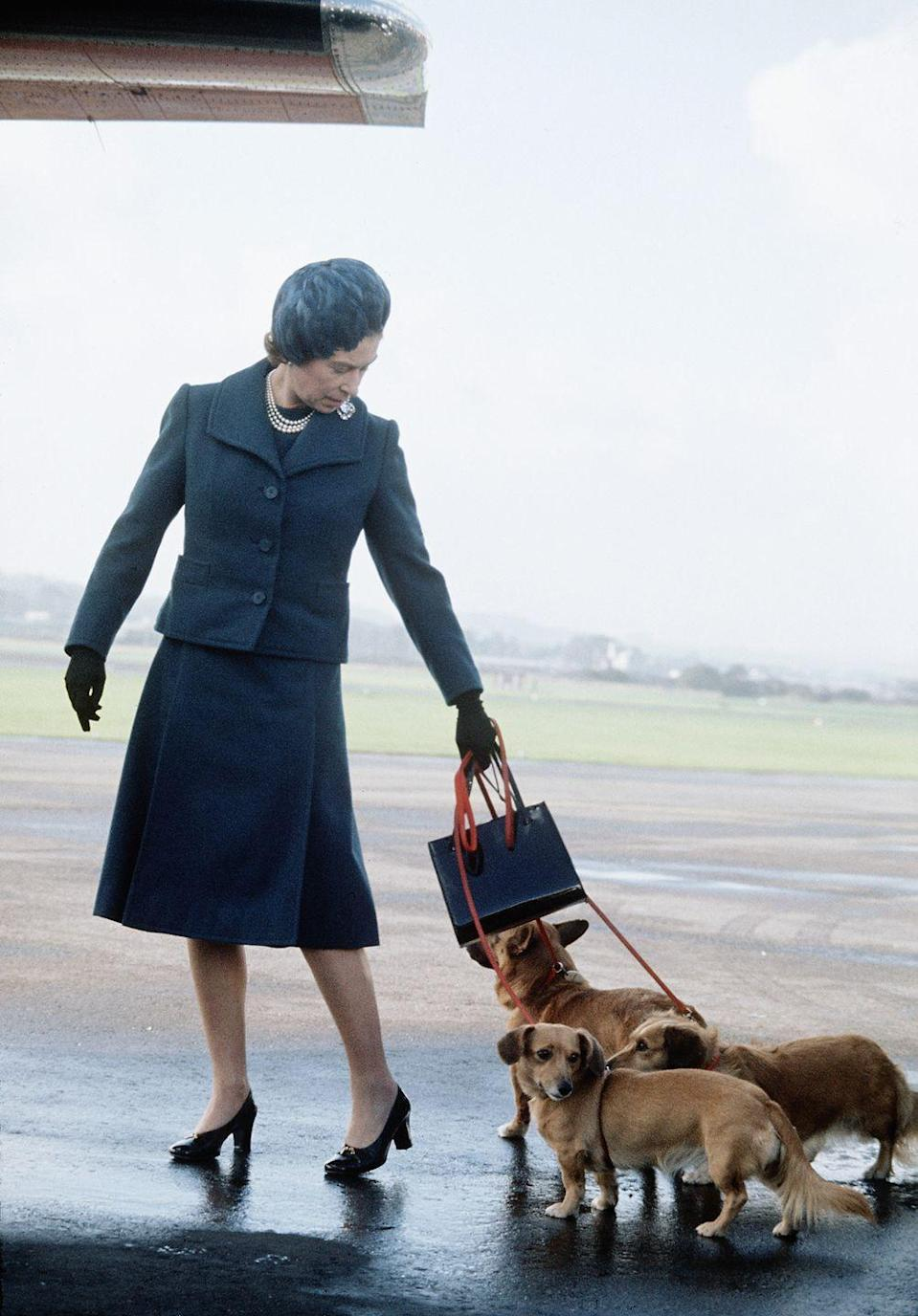 <p>Queen Elizabeth tries to wrangle three of her dogs into a plane.</p>