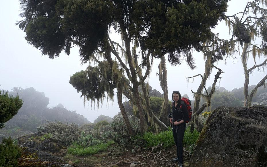 <p>This was taken about four hours after I summited Kilimanjaro. There is a long hike down to the last base camp. I was recovering from pretty bad altitude sickness here, but my friend made me pose in this surreal environment.</p>