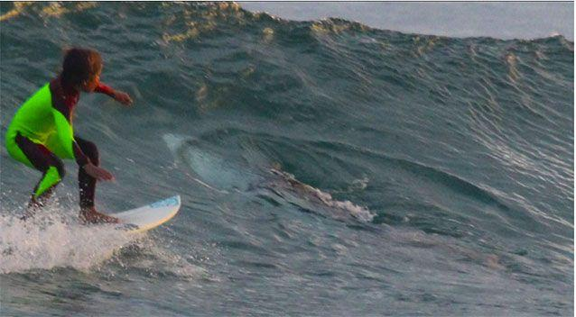 Incredible pictures show 10-year-old Eden Hasson surfing beside a 2.5 metre shark off the NSW north coast. Pictures: Chris Hasson/Facebook