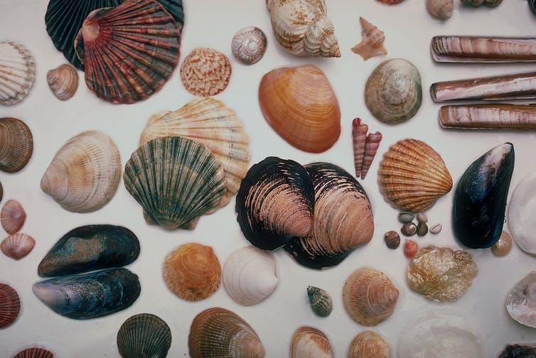 """<span class=""""caption"""">Increased incomes gave rise to more time for hobbies, such as building collections.</span> <span class=""""attribution""""><a class=""""link rapid-noclick-resp"""" href=""""https://en.wikipedia.org/wiki/Hobby#/media/File:Seashells_North_Wales_1985.jpg"""" rel=""""nofollow noopener"""" target=""""_blank"""" data-ylk=""""slk:Manfred Heyde/Wikimedia Commons"""">Manfred Heyde/Wikimedia Commons</a>, <a class=""""link rapid-noclick-resp"""" href=""""http://creativecommons.org/licenses/by-sa/4.0/"""" rel=""""nofollow noopener"""" target=""""_blank"""" data-ylk=""""slk:CC BY-SA"""">CC BY-SA</a></span>"""