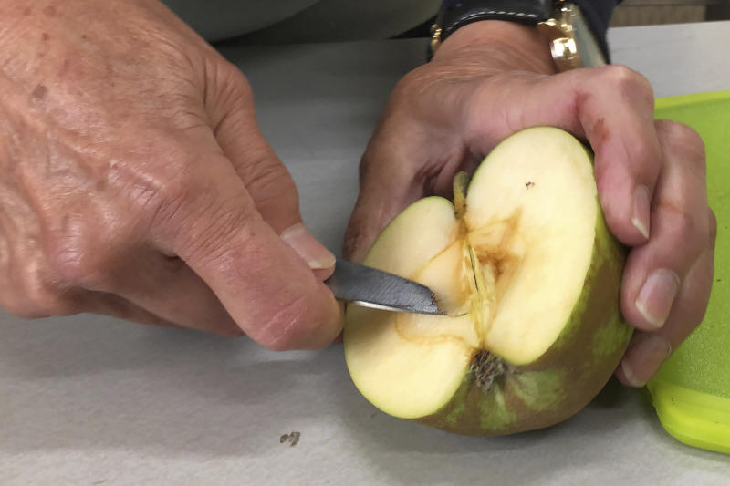 "In this Oct. 30, 2019, photo, Joanie Cooper, of the Temperate Orchard Conservancy, uses a knife to cut the seed area of a rare apple in her lab in Molalla, Oregon. Cooper and her colleagues have helped identify many of the 13 ""lost"" apple varieties that have been rediscovered in recent years by the Lost Apple Project in eastern Washington and northern Idaho. (AP Photo/Gillian Flaccus)"