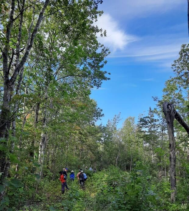 A small group of people are seen in Arlington forest near Hampton, N.S. The Arlington Forest Protection Society hosted its first biodiversity walk in the area on Saturday, Sept. 11, 2021. (Submitted by Laura Bright - image credit)