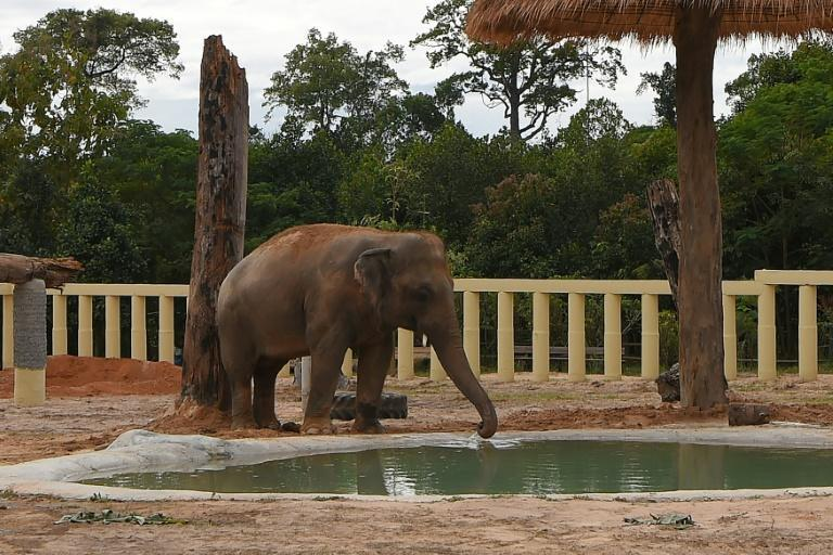 Kaavan will spend time adjusting in a smaller enclosure, before being released into the larger sanctuary