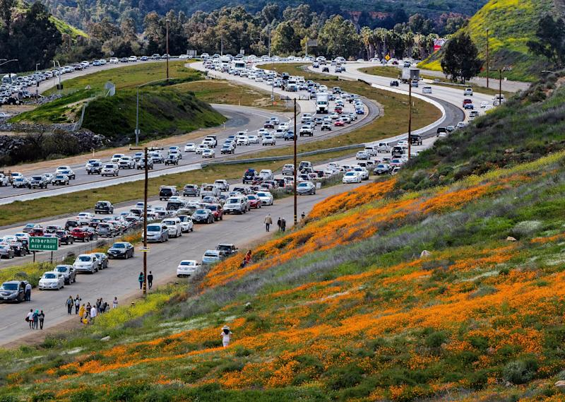 The super bloom creates a traffic jam along the I-15 freeway as wildflower enthusiasts wait to exit toward Walker Canyon in Lake Elsinore, California.