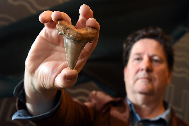Fossil enthusiast Philip Mullaly was strolling along an area known as a fossil hotspot at Jan Juc, on the country's famous Great Ocean Road, when he spotted a giant shark tooth