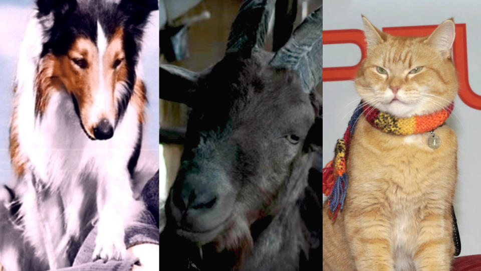 Famous movie animals. (Credit: MGM/Universal/Jörg Carstensen/Picture Alliance via Getty Images)