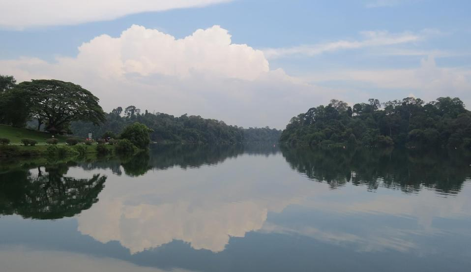 property-near-popular-parks-in-singapore-macritchie (2)