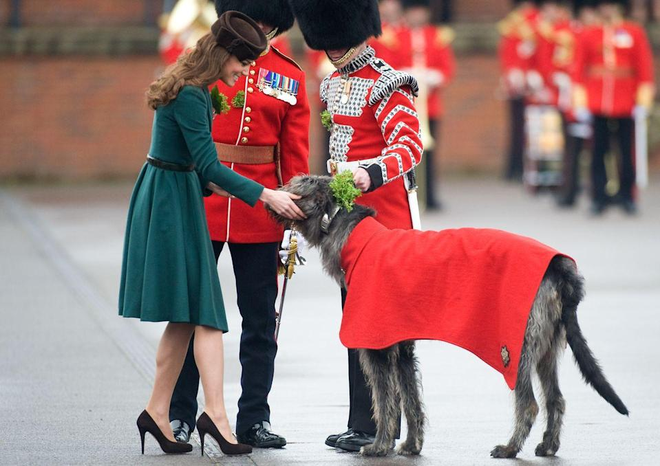 <p>Kate Middleton presents shamrocks to the Irish Guards on St. Patrick's Day—including one canine assistant.</p>