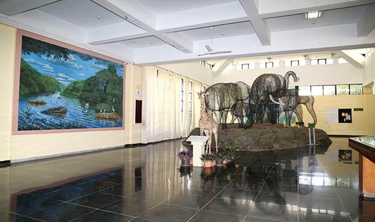 World Wildlife Day, museums, museums of India, wildlife museums of India, parenting, indian express, indian express news