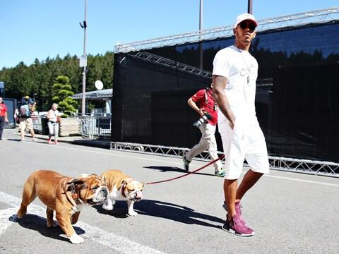 Lewis Hamilton with his pair of French bulldogs in 2016 - Credit: Getty Images Europe
