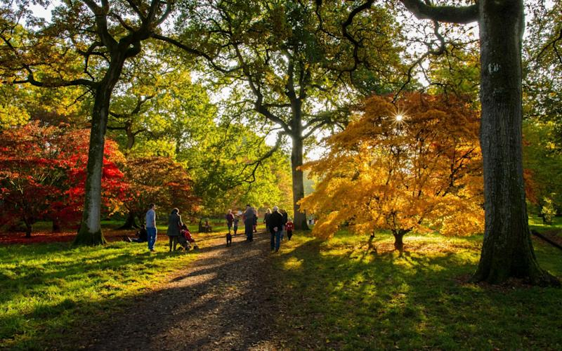 Visitors enjoying autumnal Acer Maple trees at the National Arboretum, Westonbirt, Gloucestershire - Alex Rhodes