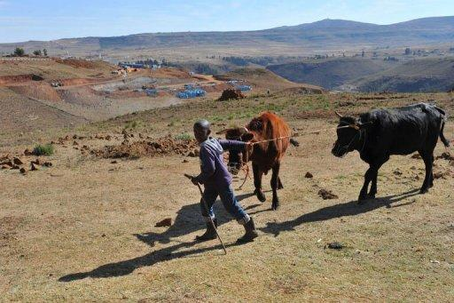 A child leads cows near the construction site on the mountain near the village of Ha Makhale in May 2012, where a Chinese company is carving out the base of what next year will become the 73-metre-high Metolong Dam