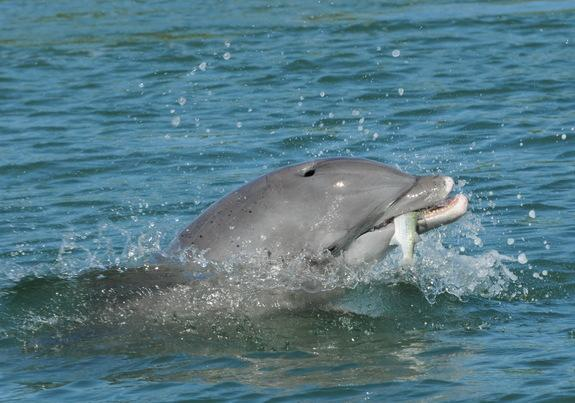 What Stranded Dolphin Guts Reveal