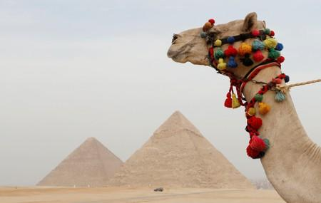 FILE PHOTO: A camel looks over the Giza Pyramids of Giza