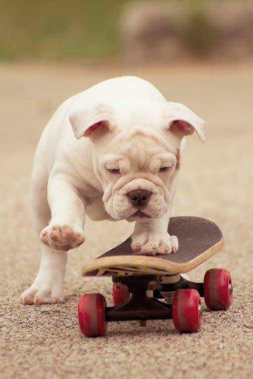 The coolest dog. He just rolls with it.