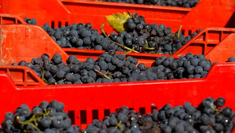 Heatwave depresses French wine production